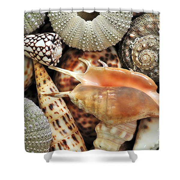 Tropical Shells Shower Curtain by Kaye Menner