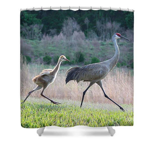Trying to Keep Up Shower Curtain by Carol Groenen