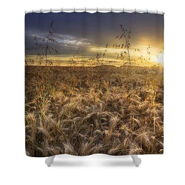 Tumble Wheat Shower Curtain by Debra and Dave Vanderlaan