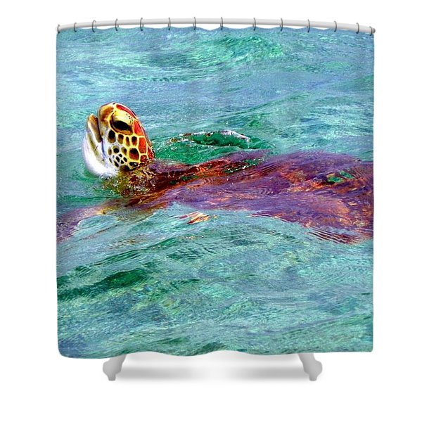 Turtle Time Shower Curtain by Karen Wiles