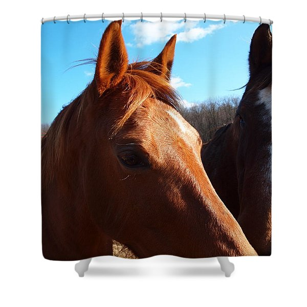 two horses in love Shower Curtain by Robert Margetts