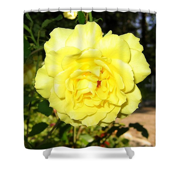 Upbeat Yellow Rose Shower Curtain by Will Borden