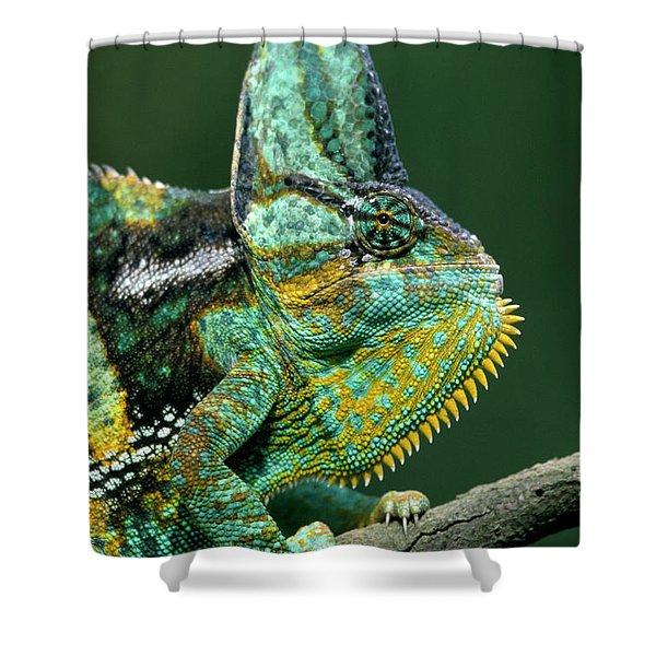 Veiled Chameleon Chamaeleo Calyptratus Shower Curtain by Ingo Arndt