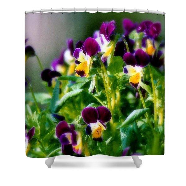 Viola Parade Shower Curtain by Karen Wiles