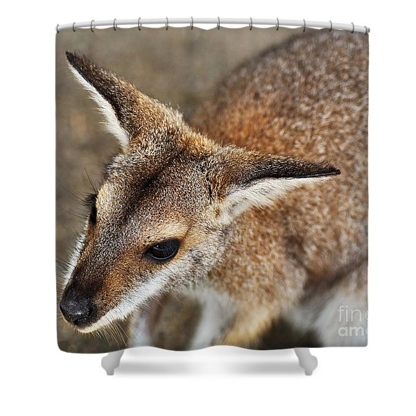 Wallaby Portrait Shower Curtain by Kaye Menner