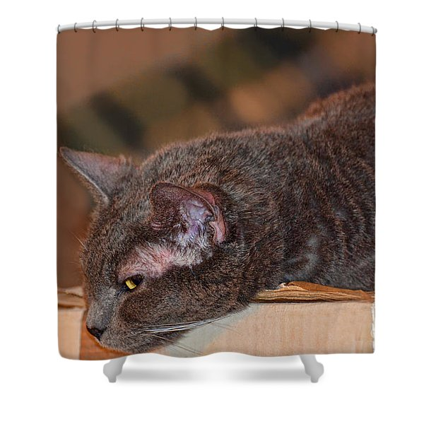 Warm Kitty Iv Shower Curtain by Debbie Portwood
