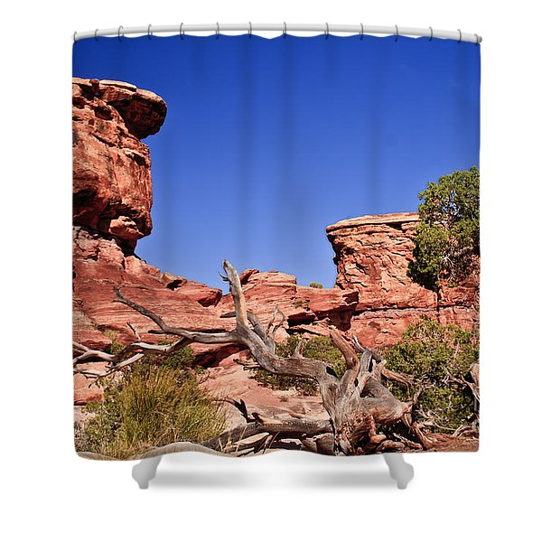 Watching Shower Curtain by Robert Bales