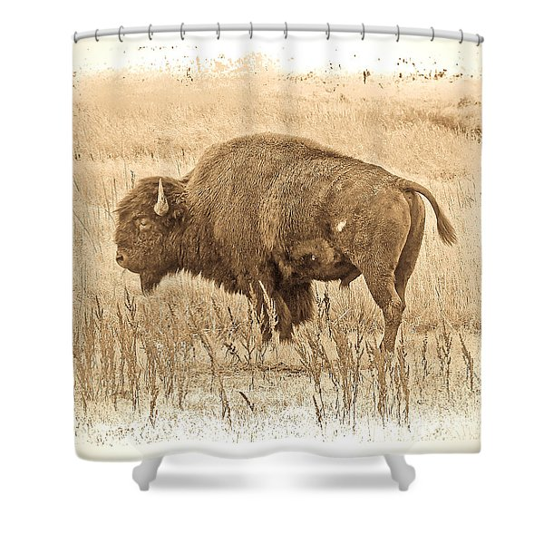 Western Buffalo Shower Curtain by Steve McKinzie