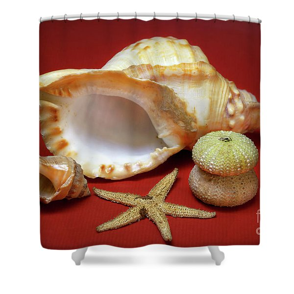 Whelks Shower Curtain by Carlos Caetano
