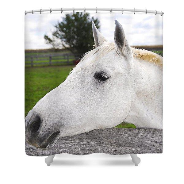 White horse Shower Curtain by Elena Elisseeva