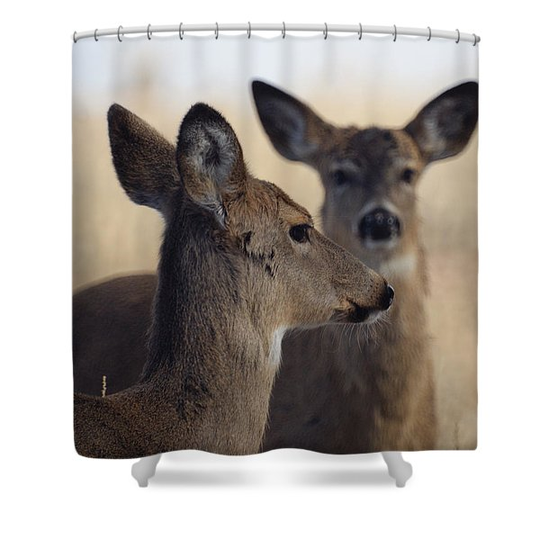 Whitetail Deer Shower Curtain by Ernie Echols