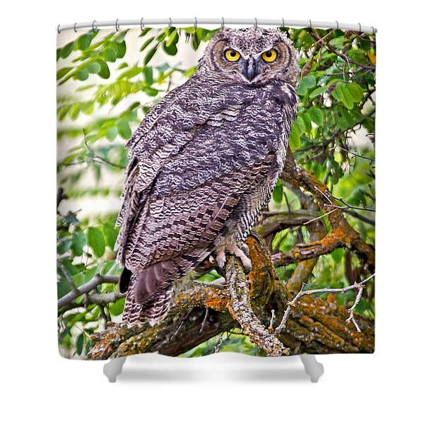Who Gives A Hoot Shower Curtain by Athena Mckinzie