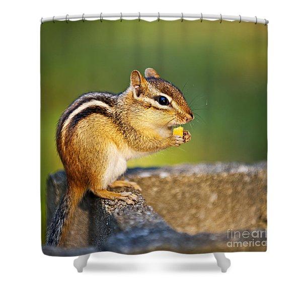 Wild Chipmunk Shower Curtain by Elena Elisseeva