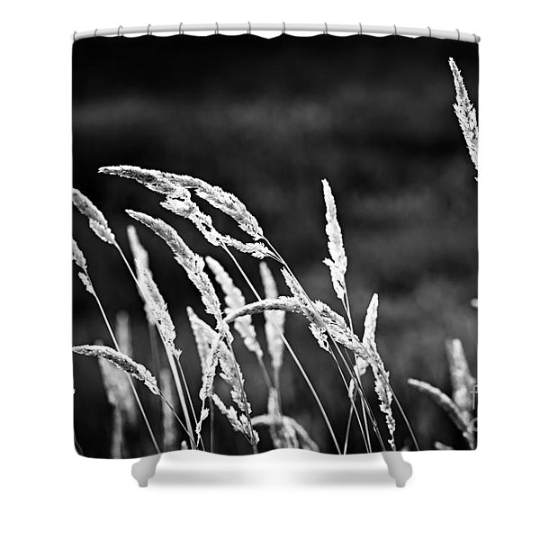 Wild grass in black and white Shower Curtain by Elena Elisseeva