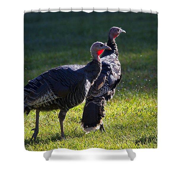 Wild Turkeys Shower Curtain by Mike  Dawson