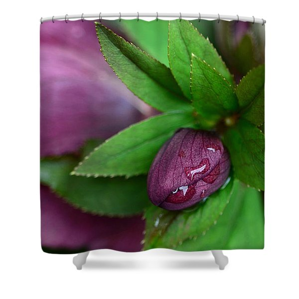 Winter Blooms Shower Curtain by Lisa  Phillips