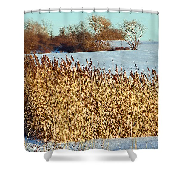 Winter Breeze Shower Curtain by Aimee L Maher Photography and Art