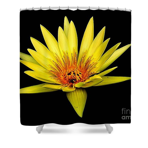 Yellow Water Lily Shower Curtain by Nick Zelinsky