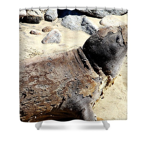 Young Elephant Seal Molting . 7D16118 Shower Curtain by Wingsdomain Art and Photography