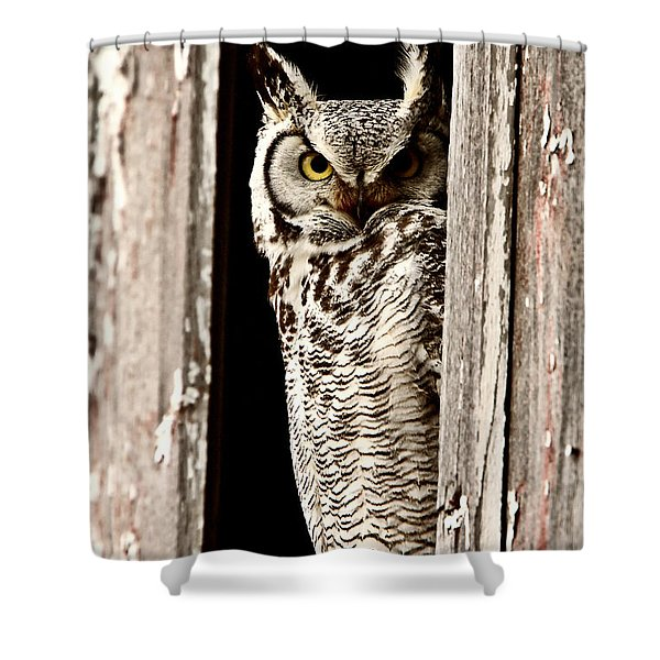 Great Horned Owl perched in barn window Shower Curtain by Mark Duffy