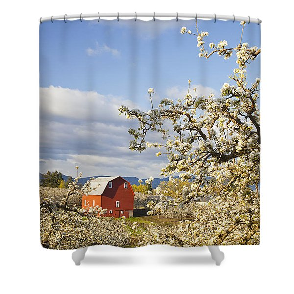 Apple Blossom Trees And A Red Barn In Shower Curtain by Craig Tuttle