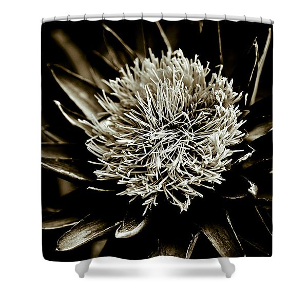 - Artichoke Flower Shower Curtain by Frank Tschakert