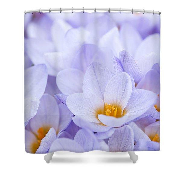Crocus flowers Shower Curtain by Elena Elisseeva