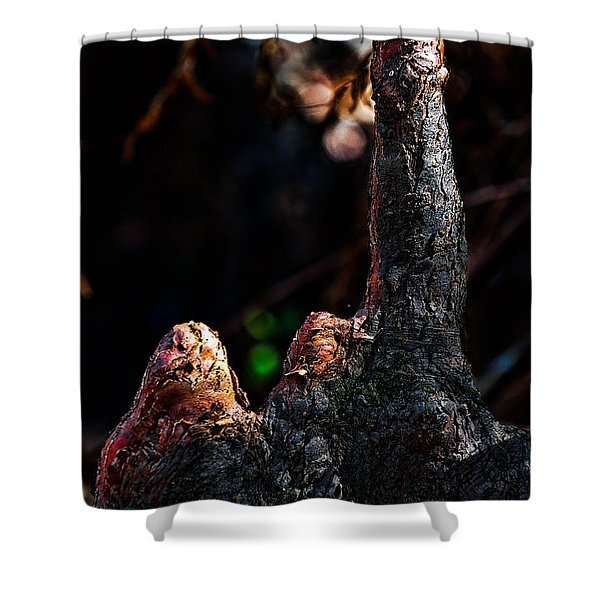 Cypress Knees Shower Curtain by Christopher Holmes