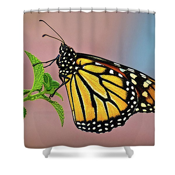 Taking A Break Shower Curtain by Christopher Holmes