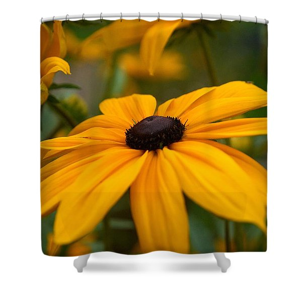 Goldilocks Gloriosa Daisy 2 Shower Curtain by Jouko Lehto