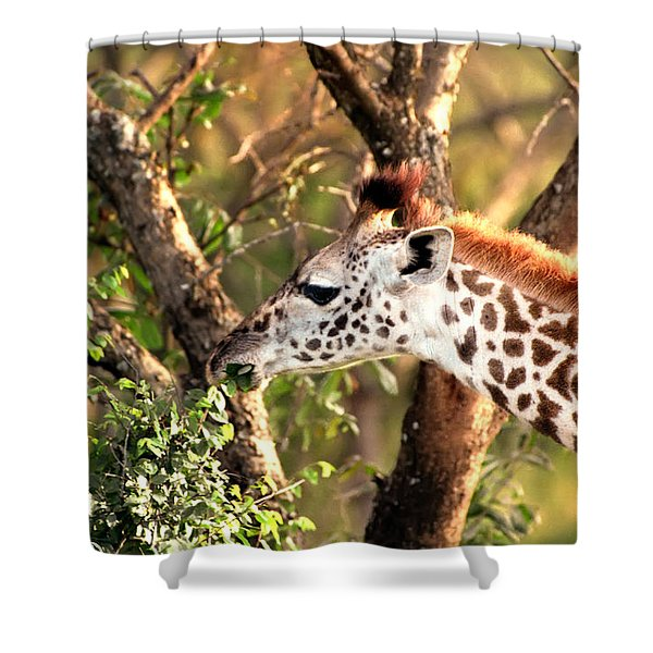 Giraffe Shower Curtain by Sebastian Musial