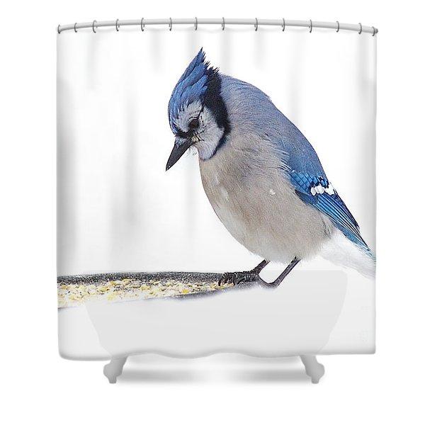 Sitting Pretty Shower Curtain by Andrea Kollo