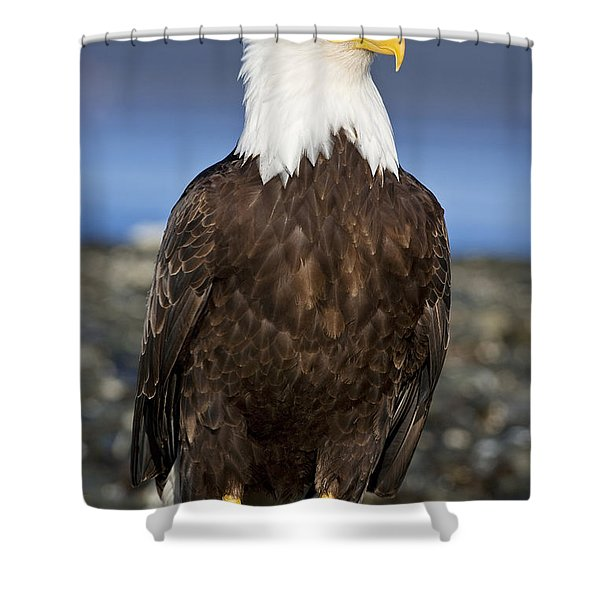 A Bald Eagle Shower Curtain by John Hyde - Printscapes