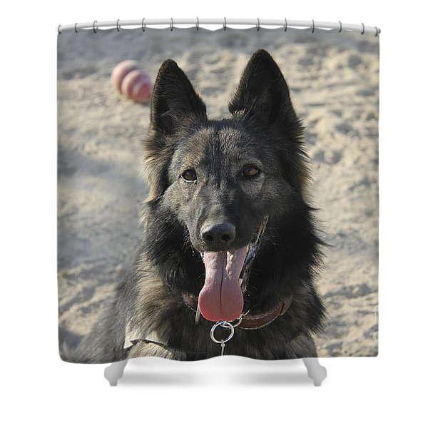 A Belgian Tervuren Military Working Dog Shower Curtain by Stocktrek Images