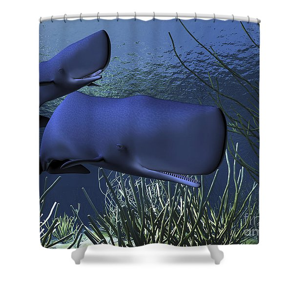 A Mother Sperm Whale Escorts Her Calf Shower Curtain by Corey Ford