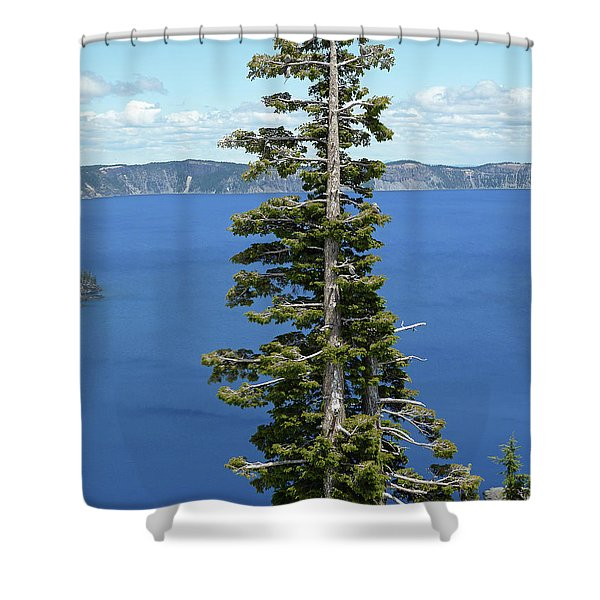 A Tree With A View Shower Curtain by Methune Hively