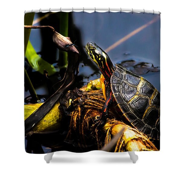 Ant Meets Turtle Shower Curtain by Bob Orsillo