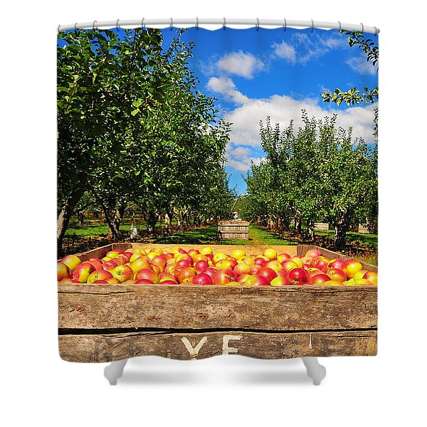 Apple Picking Season Shower Curtain by Catherine Reusch  Daley