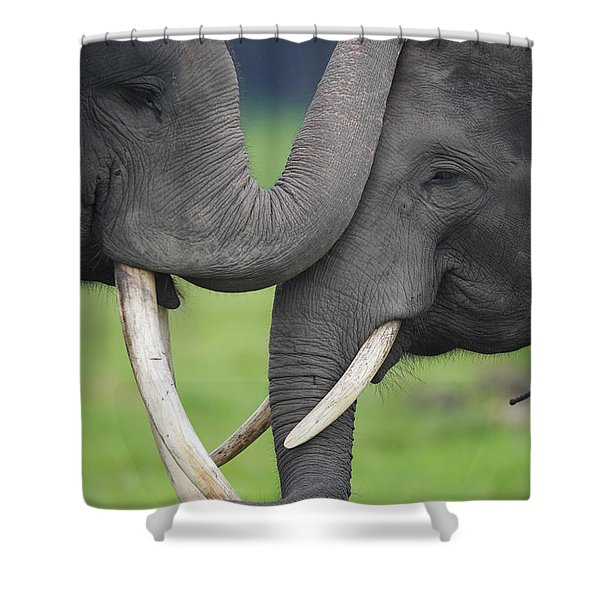 Asian Elephant Greeting Shower Curtain by Cyril Ruoso