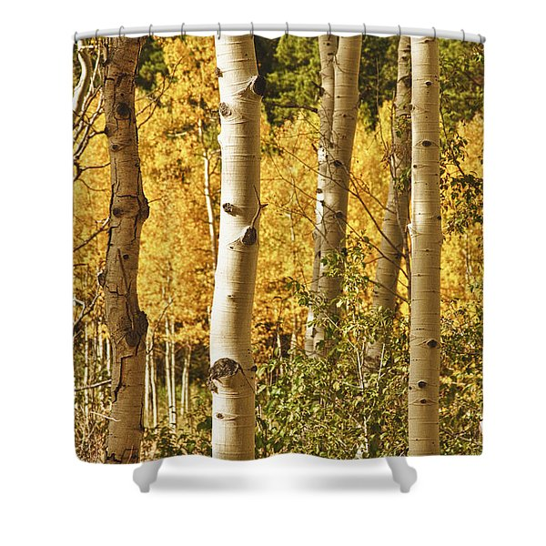 Aspen Gold Shower Curtain by James BO  Insogna