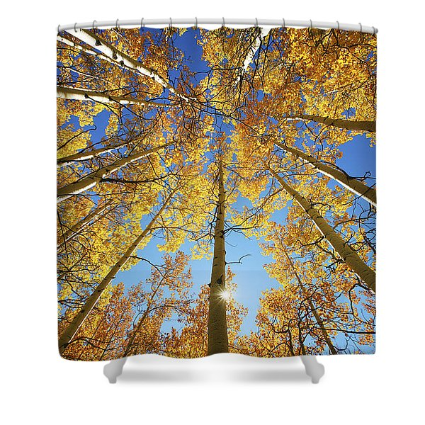 Aspen Tree Canopy 2 Shower Curtain by Ron Dahlquist - Printscapes