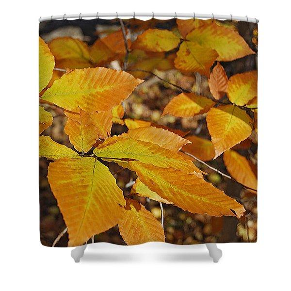 Autumn Beech  Shower Curtain by Michael Peychich