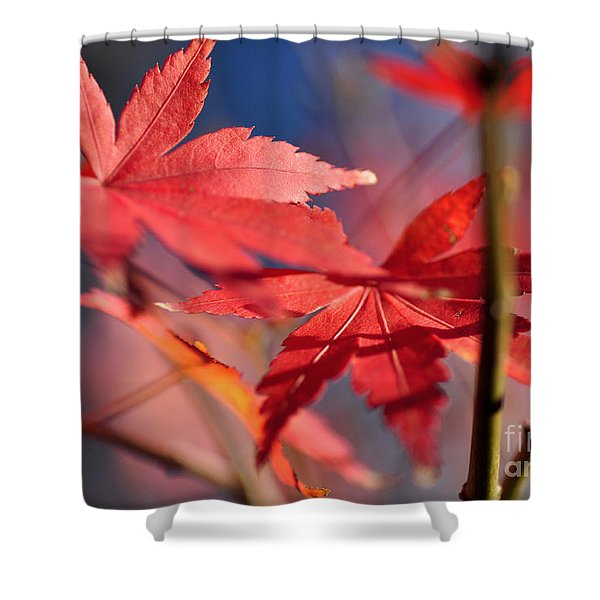 Autumn Maple Shower Curtain by Kaye Menner