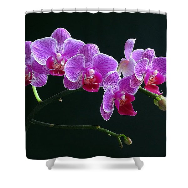 Baby Bloomers Shower Curtain by Juergen Roth