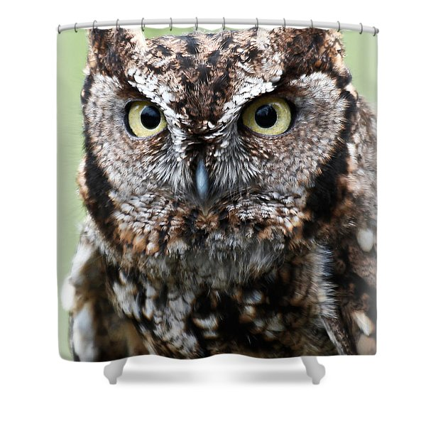 Baby Owl Eyes Shower Curtain by Athena Mckinzie