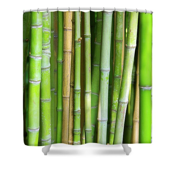 Bamboo Background Shower Curtain by Carlos Caetano