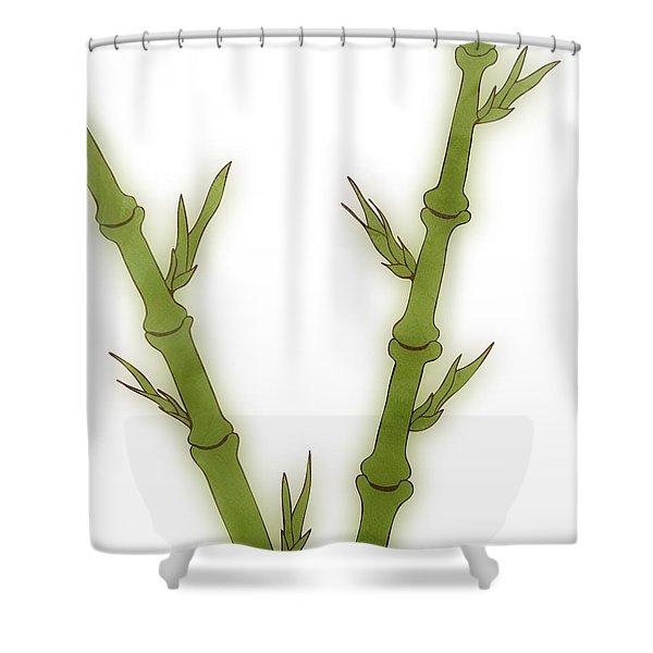 Bamboo Shower Curtain by Frank Tschakert