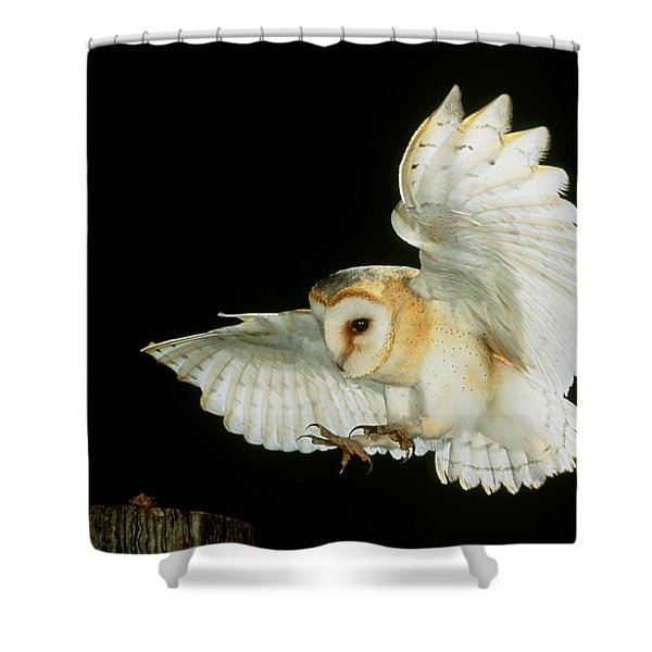 Barn Owl Shower Curtain by Andy Harmer and SPL and Photo Researchers