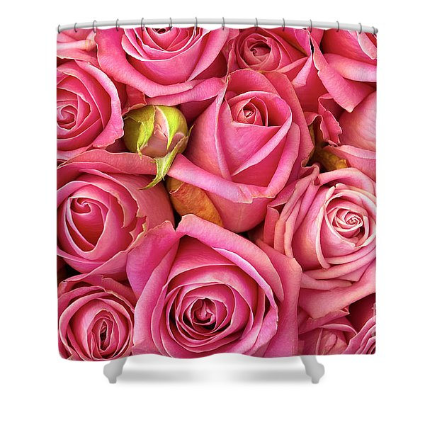 Bed Of Roses Shower Curtain by Carlos Caetano
