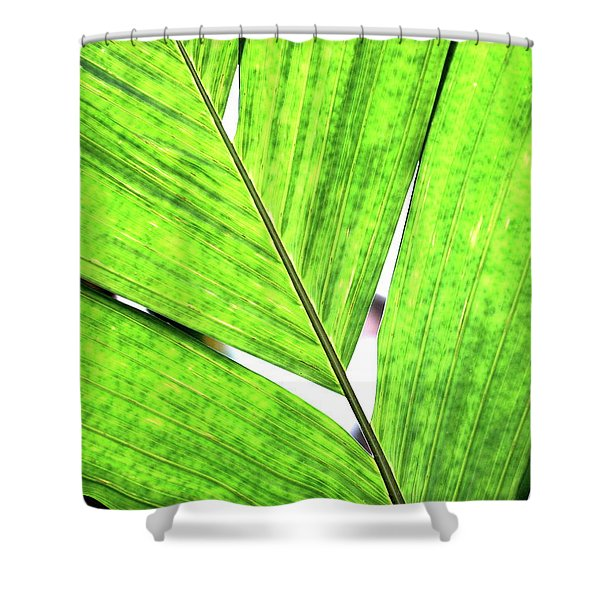 Big Green Leaf . 7D5763 Shower Curtain by Wingsdomain Art and Photography